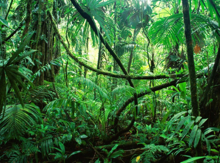 'More-than-sustainable' cultural forests of Amazonian pasts