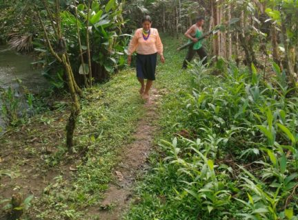 Revival of indigenous agroforestry