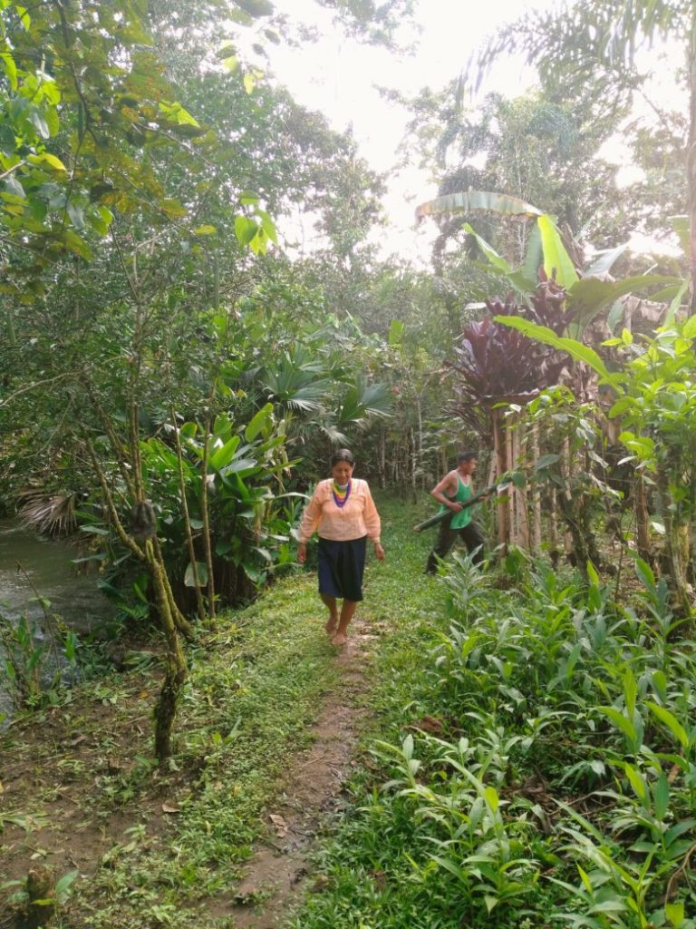 Napo Runa ckakras: Revival of indigenous agroforestry systems